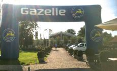 Gazelle Boog